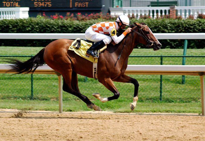 At Yarışları Sporları